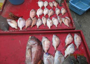 奥村釣船の2019年5月5日(日)5枚目の写真