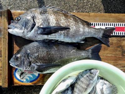 西森渡船の2019年5月10日(金)2枚目の写真