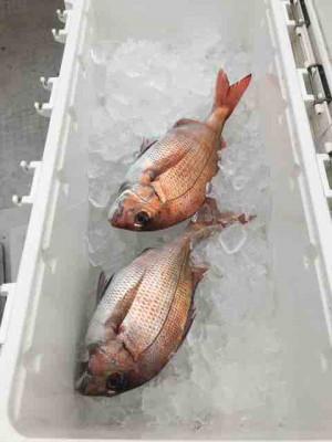 龍宮丸の2019年4月24日(水)2枚目の写真
