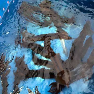 第八幸松丸の2019年5月17日(金)4枚目の写真
