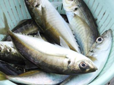 釣具の海友の2019年5月6日(月)1枚目の写真