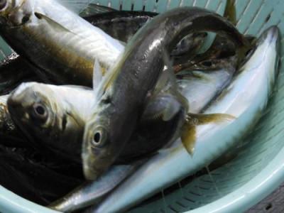釣具の海友の2019年5月6日(月)2枚目の写真
