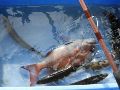 釣具の海友の2019年5月6日(月)3枚目の写真