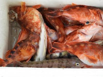 釣具の海友の2019年5月12日(日)1枚目の写真