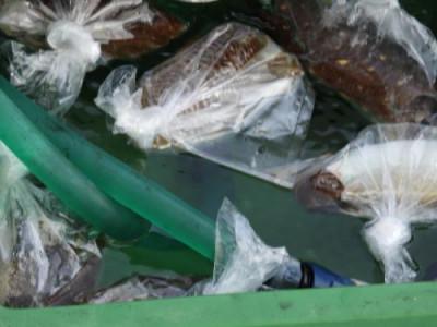 釣具の海友の2019年5月15日(水)3枚目の写真
