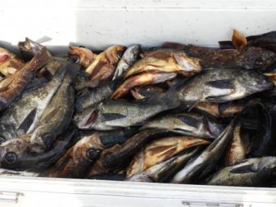 釣具の海友の2019年5月15日(水)5枚目の写真