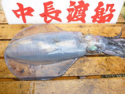 中長渡船の2019年5月22日(水)3枚目の写真