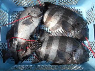 弁天丸の2019年5月9日(木)2枚目の写真