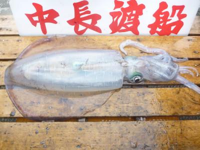 中長渡船の2019年5月27日(月)2枚目の写真