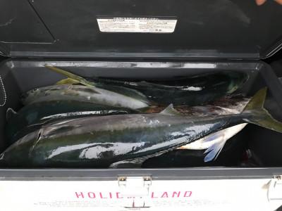 アラタニ釣具店の2019年5月27日(月)3枚目の写真