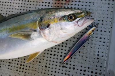 西岡遊漁の2019年5月17日(金)2枚目の写真