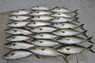 西岡遊漁の2019年5月20日(月)4枚目の写真