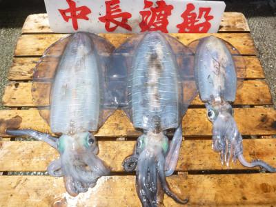中長渡船の2019年5月30日(木)3枚目の写真