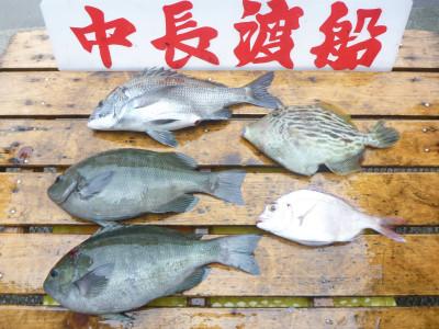 中長渡船の2019年5月31日(金)3枚目の写真