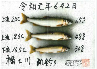 富士川漁業協同組合の2019年6月2日(日)1枚目の写真