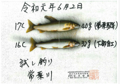 富士川漁業協同組合の2019年6月2日(日)3枚目の写真