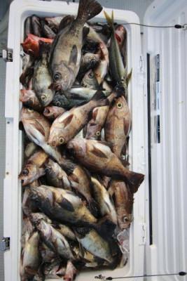 西岡遊漁の2019年5月21日(火)4枚目の写真