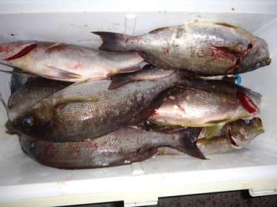 丸銀釣りセンターの2019年5月21日(火)4枚目の写真