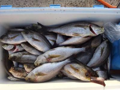 丸銀釣りセンターの2019年5月24日(金)4枚目の写真