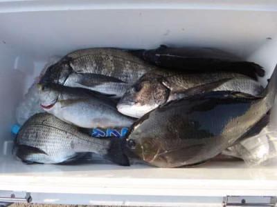 丸銀釣りセンターの2019年5月24日(金)5枚目の写真