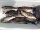 丸銀釣りセンターの2019年5月26日(日)3枚目の写真