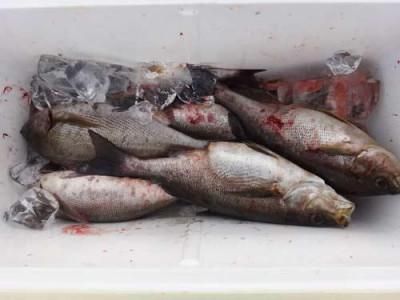 丸銀釣りセンターの2019年5月29日(水)2枚目の写真