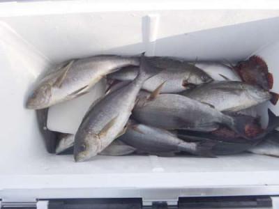 丸銀釣りセンターの2019年5月30日(木)1枚目の写真