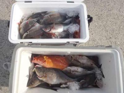 丸銀釣りセンターの2019年5月30日(木)2枚目の写真