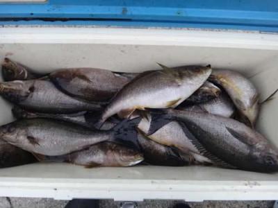 丸銀釣りセンターの2019年5月30日(木)3枚目の写真