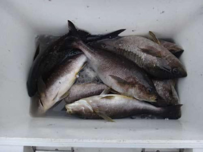 丸銀釣りセンターの2019年5月30日(木)4枚目の写真