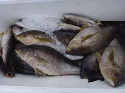 丸銀釣りセンターの2019年5月30日(木)5枚目の写真
