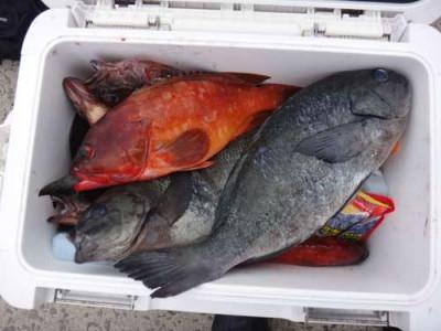 丸銀釣りセンターの2019年5月31日(金)2枚目の写真
