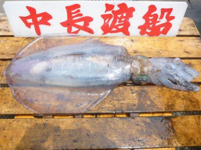 中長渡船の2019年6月17日(月)3枚目の写真
