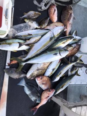アラタニ釣具店の2019年6月18日(火)3枚目の写真
