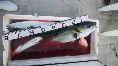アラタニ釣具店の2019年6月19日(水)1枚目の写真