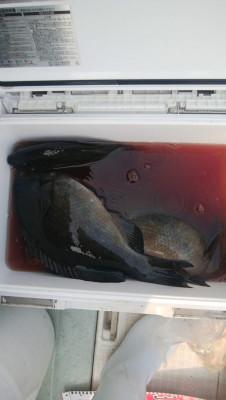 アラタニ釣具店の2019年6月19日(水)3枚目の写真