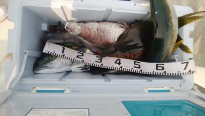 アラタニ釣具店の2019年6月19日(水)4枚目の写真