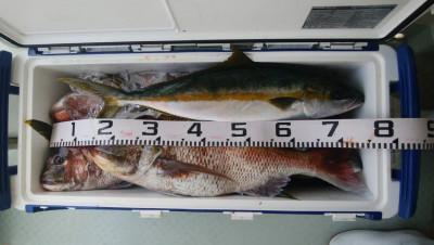 アラタニ釣具店の2019年6月19日(水)5枚目の写真