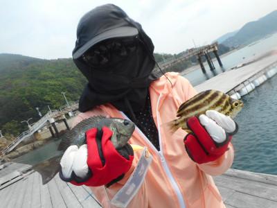 由良海つり公園&釣堀ランドの2019年6月21日(金)3枚目の写真