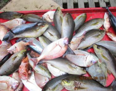 奥村釣船の2019年6月24日(月)3枚目の写真
