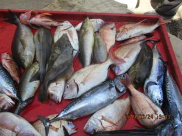 奥村釣船の2019年6月24日(月)4枚目の写真