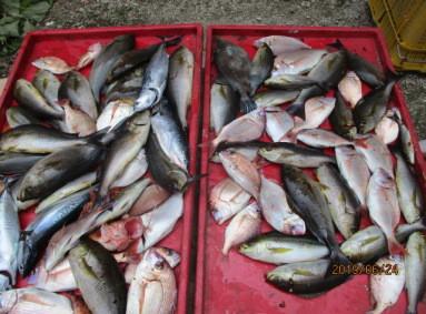 奥村釣船の2019年6月24日(月)5枚目の写真