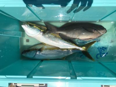 アラタニ釣具店の2019年6月25日(火)2枚目の写真
