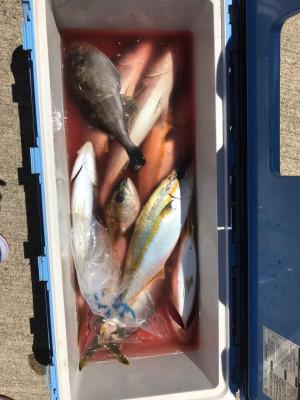 アラタニ釣具店の2019年6月25日(火)3枚目の写真