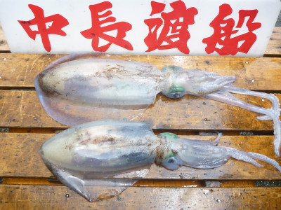 中長渡船の2019年6月26日(水)2枚目の写真