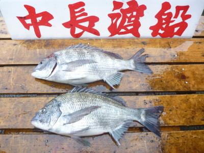 中長渡船の2019年6月26日(水)3枚目の写真