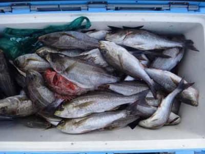 丸銀釣りセンターの2019年6月19日(水)3枚目の写真