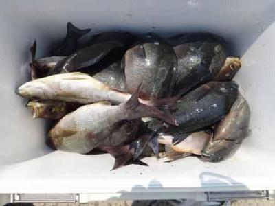 丸銀釣りセンターの2019年6月19日(水)4枚目の写真