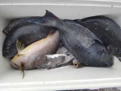 丸銀釣りセンターの2019年6月20日(木)3枚目の写真
