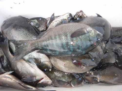 丸銀釣りセンターの2019年6月22日(土)4枚目の写真
